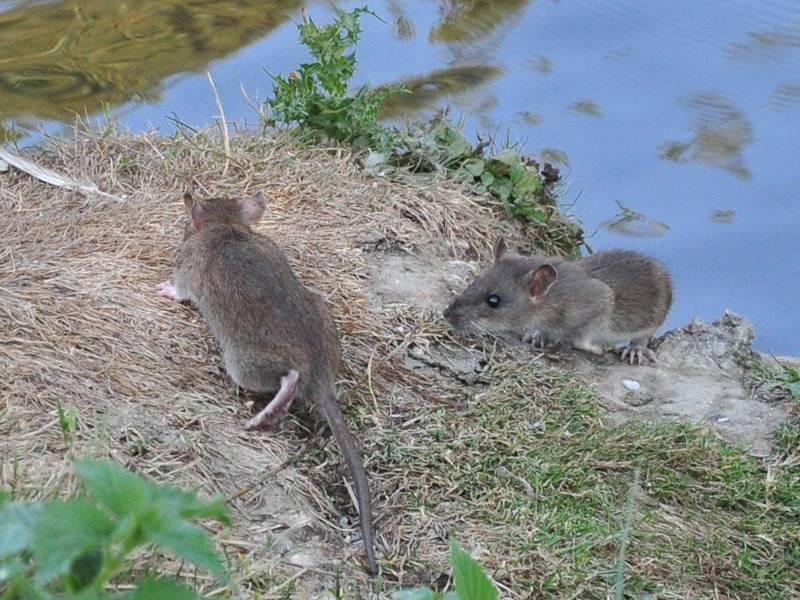 Rat ? demande de confirmation SVP 2777s